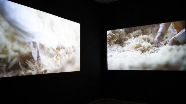 Lena Bui, Where birds dance their last, 2012